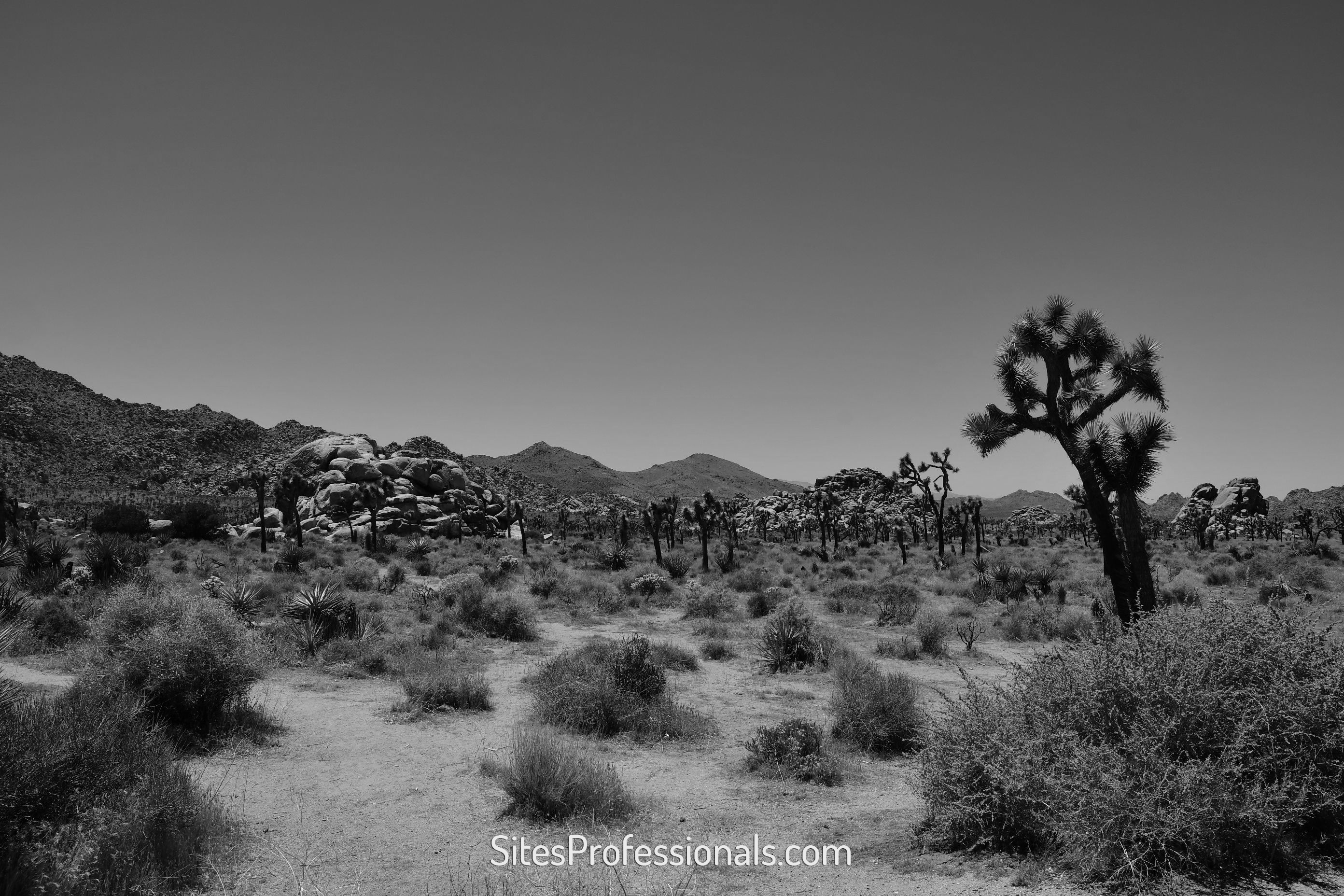 Joshua Tree picture for new psychiatrist opportunities with Sites Professionals